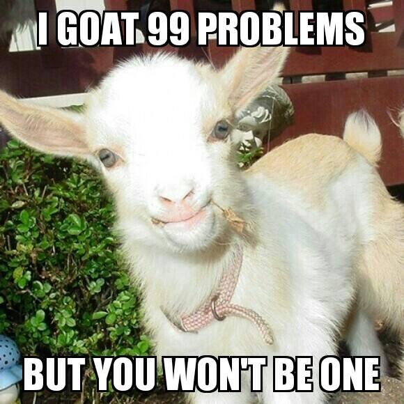 Funny Goat Meme Image Photo Joke 13