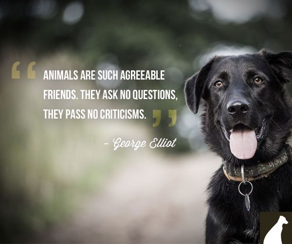 Quotes About Pets And Friendship 01