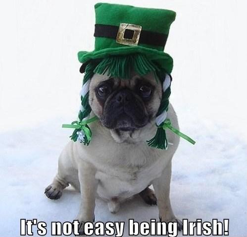St. Patrick's Day Meme 29