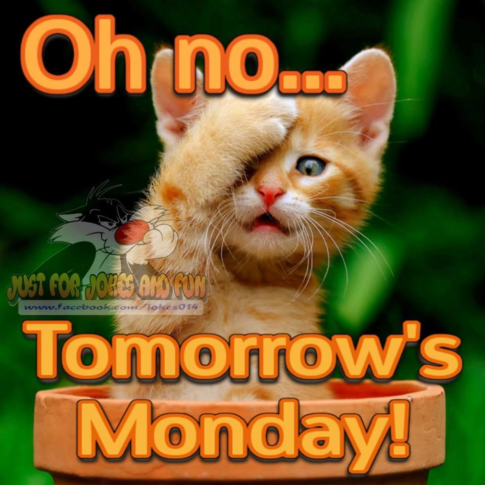 Oh No...Tomorrows Monday!