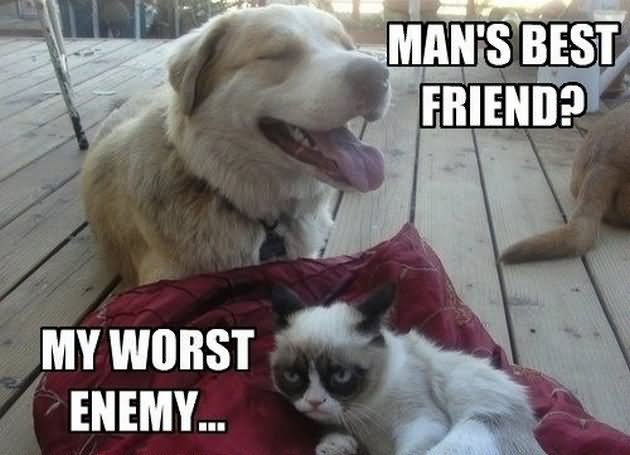 Grumpy Cat Meme Mans Best Friend My Wrost Enemy