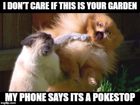 I Don't Care If This Is Your Garden My Phone Says Its A Pokemon Go Memes