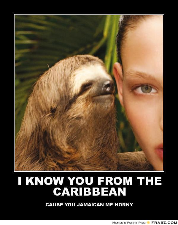 I know you from the caribbean Funny Sloth Rape Memes Images