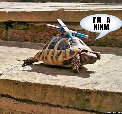 Im A Ninja Funny Ninja Memes Graphic