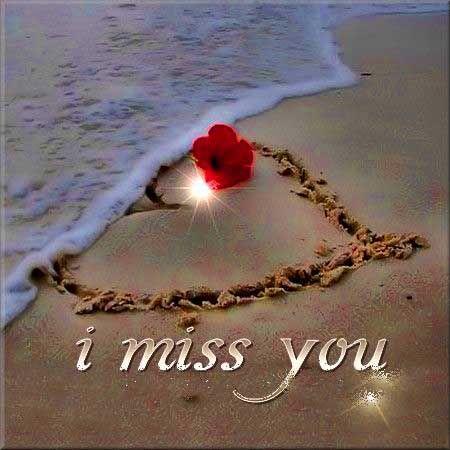 Rose I Miss You Miss U Wallpaper For Boyfriend