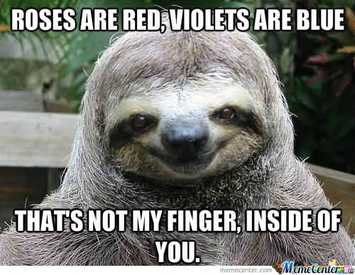 Roses are red violets are blue that's not my finger inside of you Funny Sloth Rape Memes Images