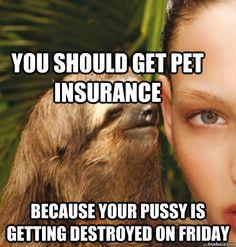 You should get pet insurance Funny Sloth Rape Memes Images