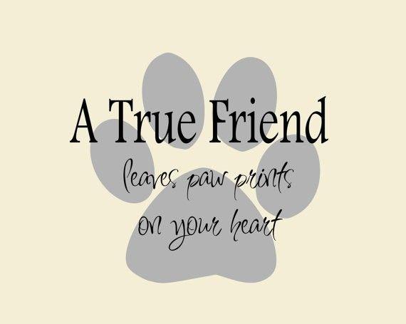 Dog Quotes Pinterest Meme Image 02