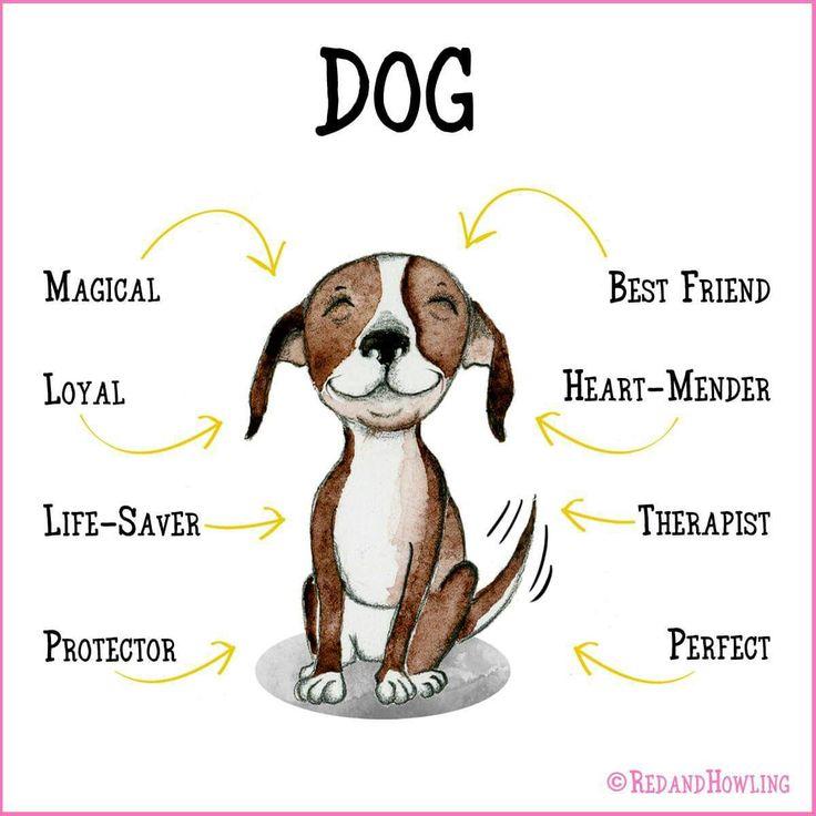 Dog Quotes Pinterest Meme Image 11