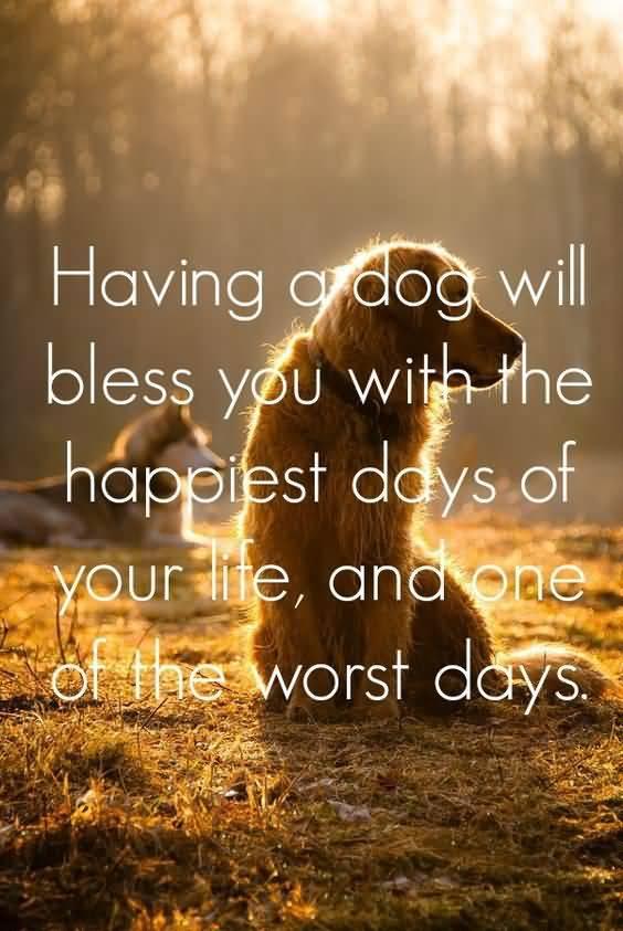 Dog Quotes Pinterest Meme Image 16