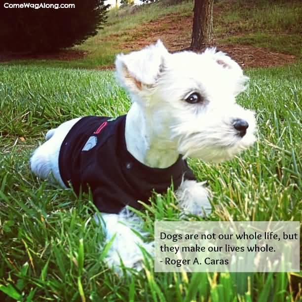 Dog Quotes Pinterest Meme Image 19