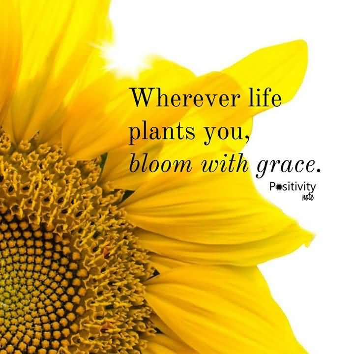 Girls Night Out Quotes Tumblr: 25 Famous Quotes About Sunflowers With Sayings