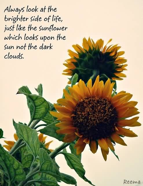 25 Famous Quotes About Sunflowers With Sayings | QuotesBae