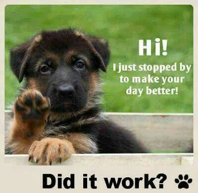 DOGGIE DAY CARE - Page 2 German-Shepherd-Quotes-Meme-Image-07