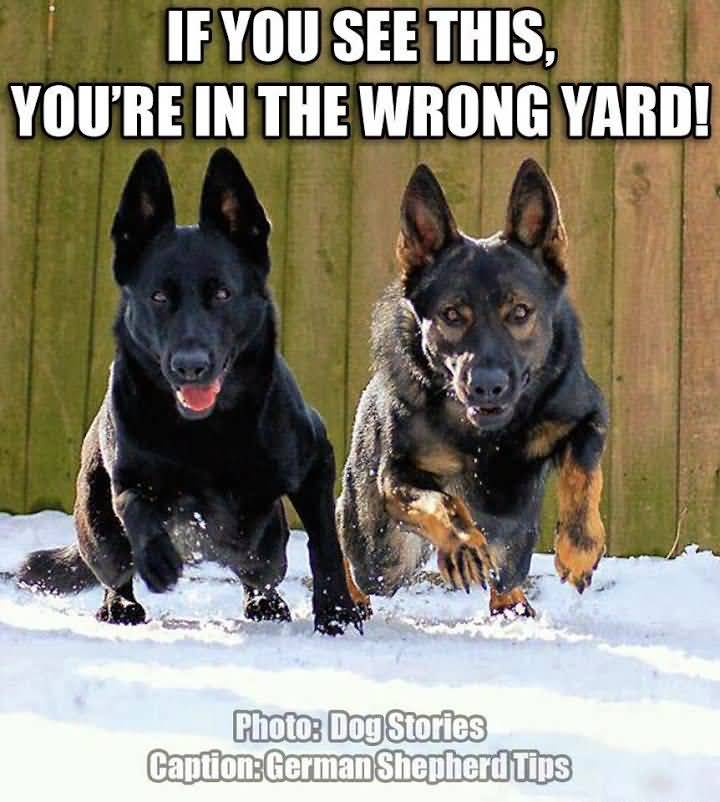 German Shepherd Quotes Meme Image 16