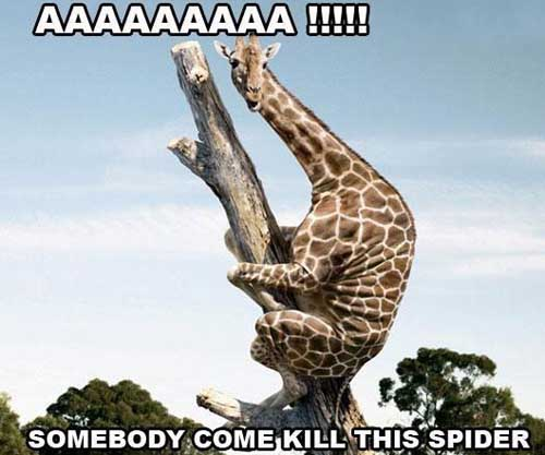 Giraffe Quotes Funny Meme Image 08