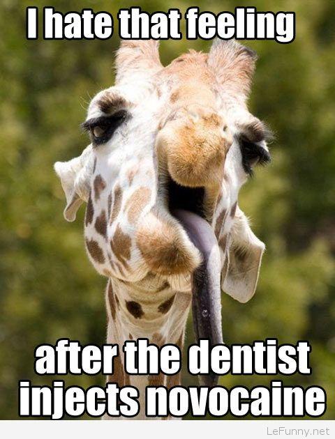 Giraffe Quotes Funny Meme Image 13