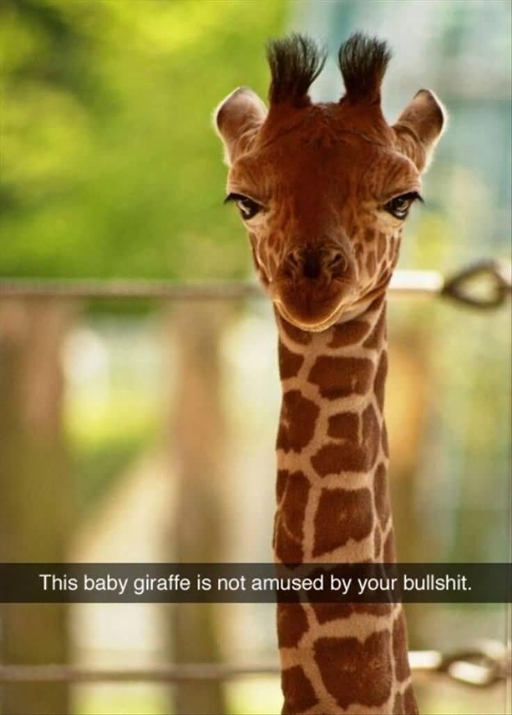 Giraffe Quotes Funny Meme Image 16