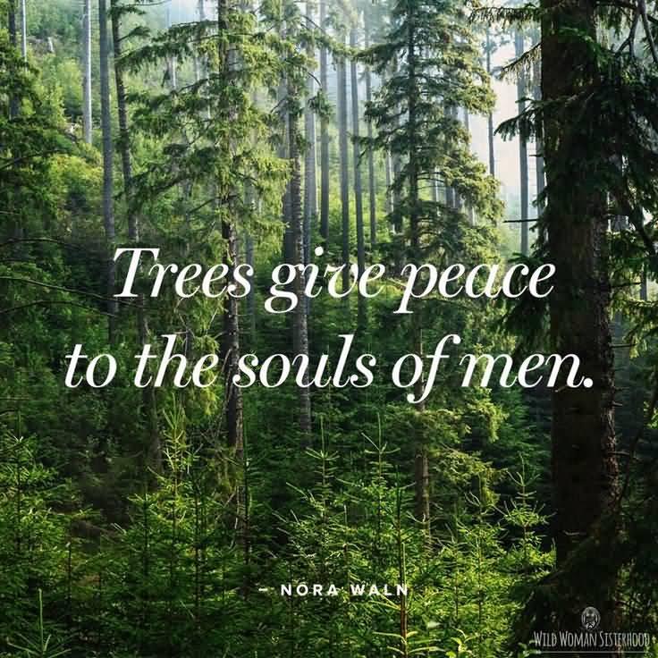 Nature Quotes Pinterest Meme Image 15