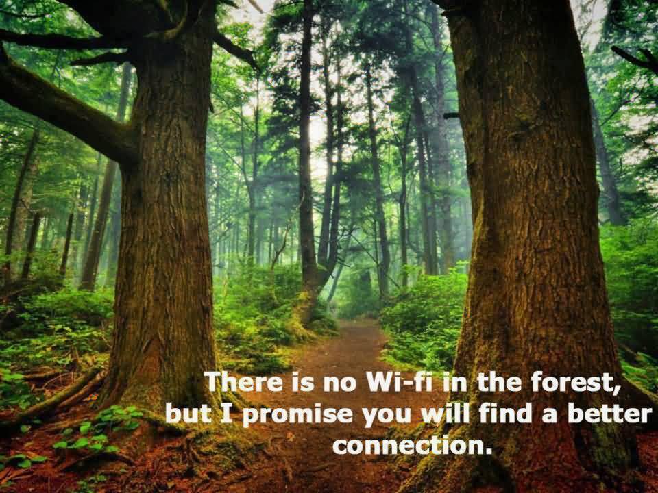Nature Quotes Pinterest Meme Image 16