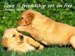 Puppy Love Quotes Meme Image 01