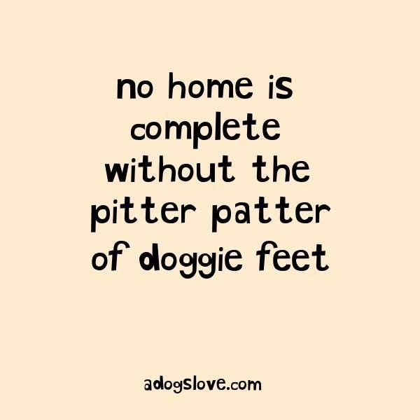 Puppy Love Quotes Meme Image 07