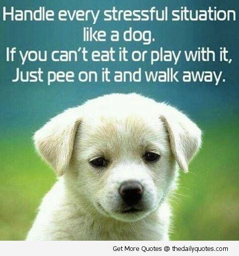 Puppy Love Quotes Meme Image 09
