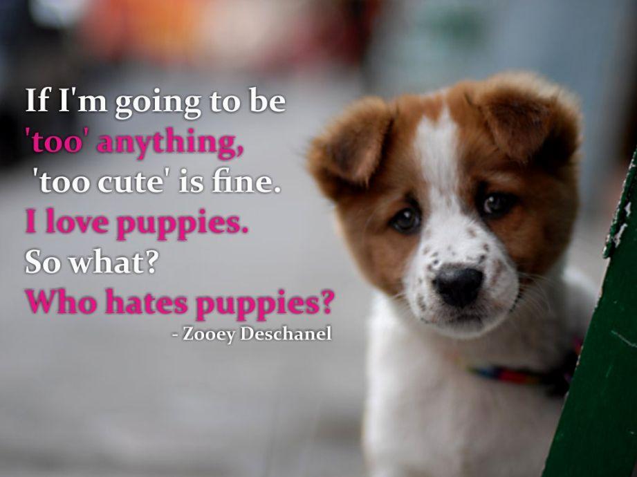 Puppy Love Quotes Meme Image 11