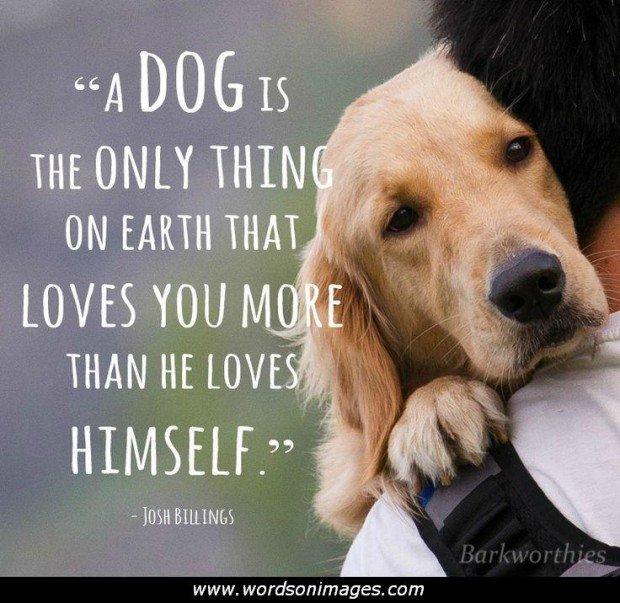 Puppy Love Quotes Meme Image 14