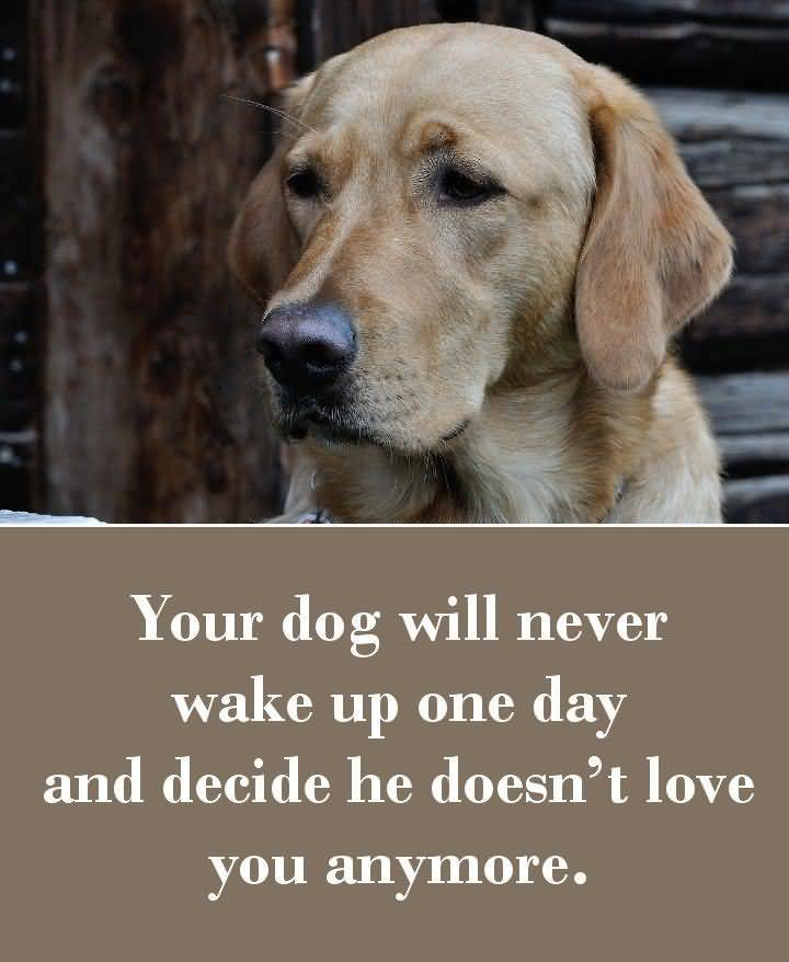 Puppy Love Quotes Meme Image 17