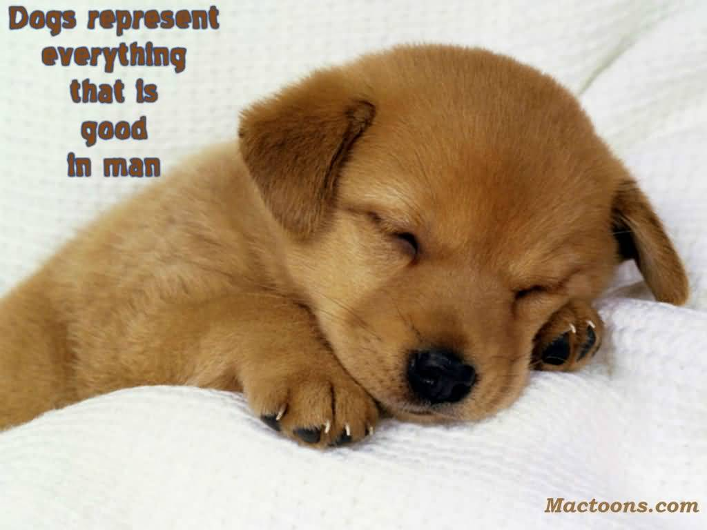 Puppy Love Quotes Meme Image 18