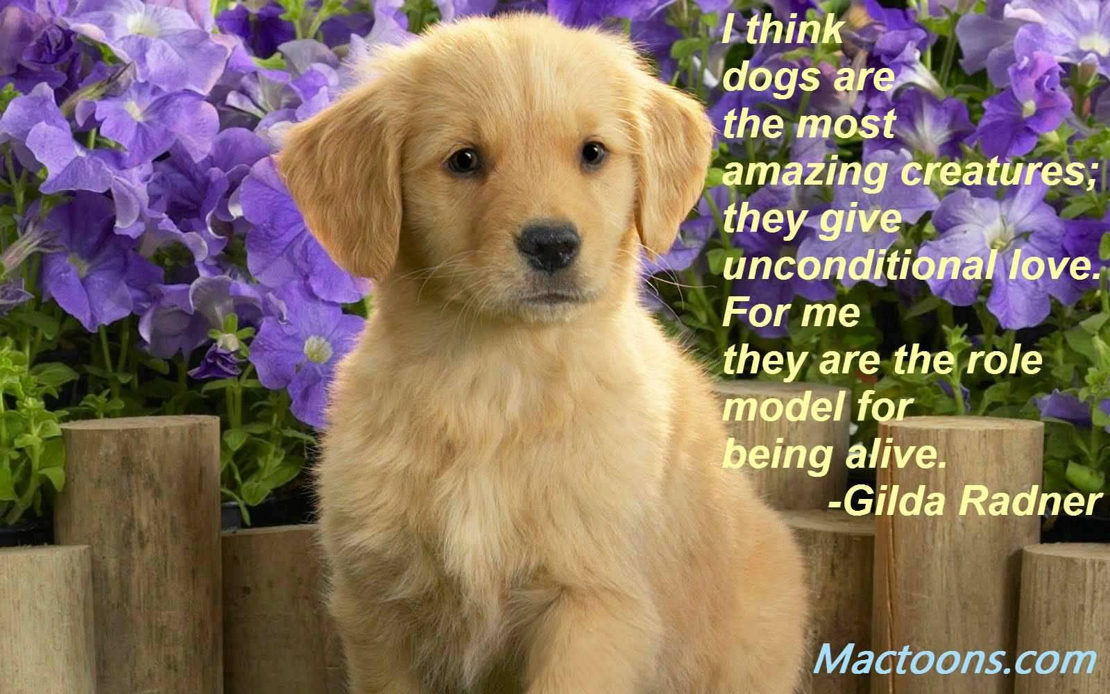 Puppy Love Quotes Meme Image 19