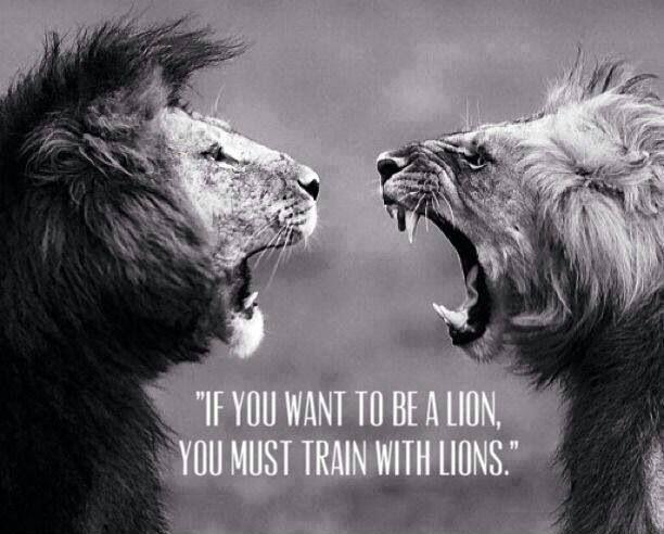 Quotes About Lions Meme Image 06