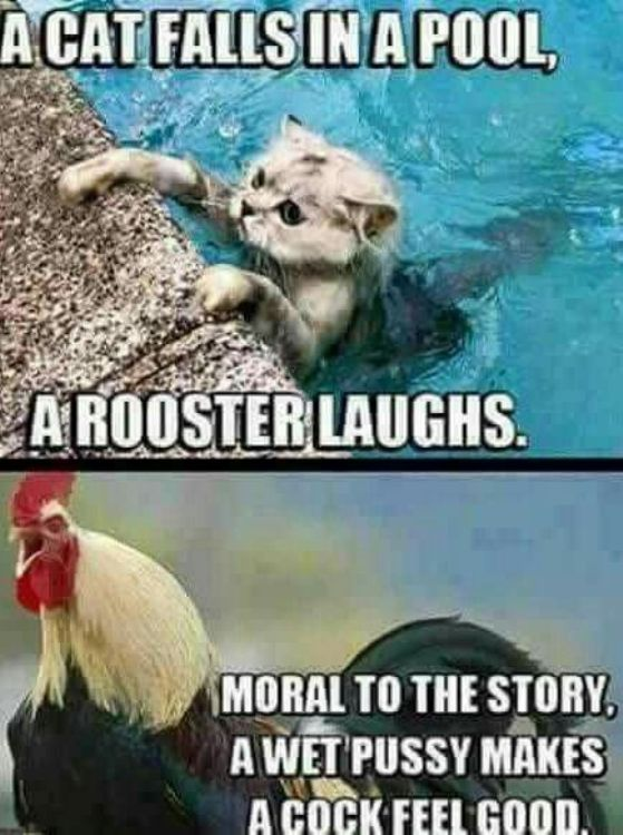 A Cat Falls In A Pool, A Rooster Laughs Moral To The Story A Wet Pussy Makes A Cock Feel Good