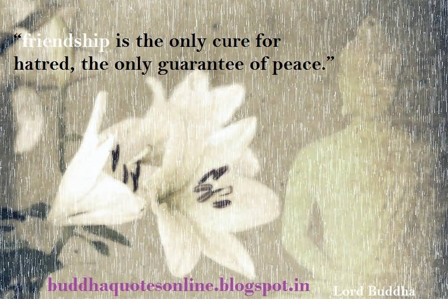 60 Buddha Quotes About Friendship Photos Pictures QuotesBae Cool Buddha Quotes About Friendship