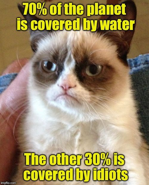 Cat Facts Meme Joke Photo