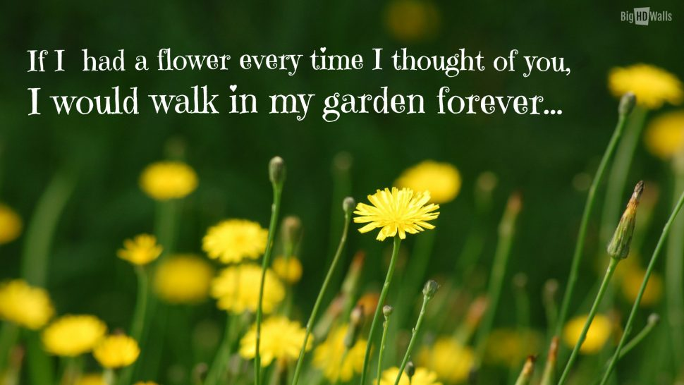 Flower And Love Quotes 01