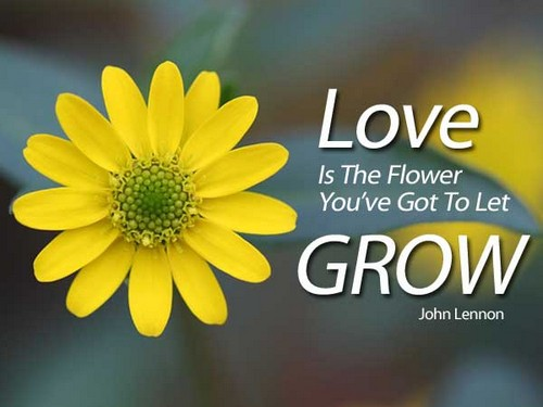 Flower And Love Quotes 07