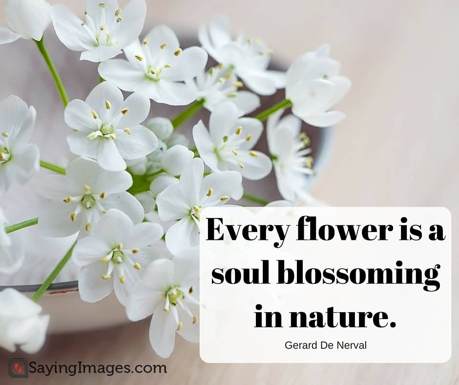Flower And Love Quotes 16