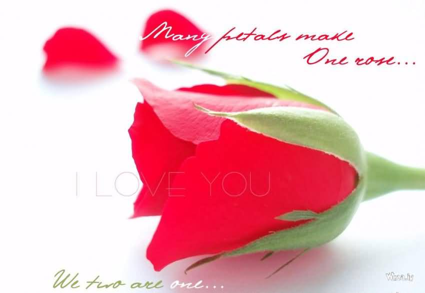 Flower Love Quotes 07