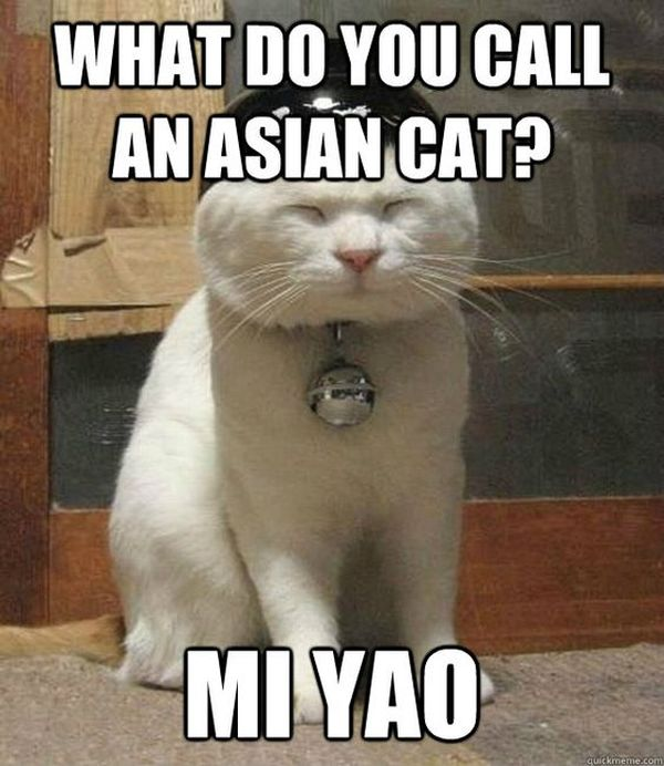 Funny Asian Cat Images Memes