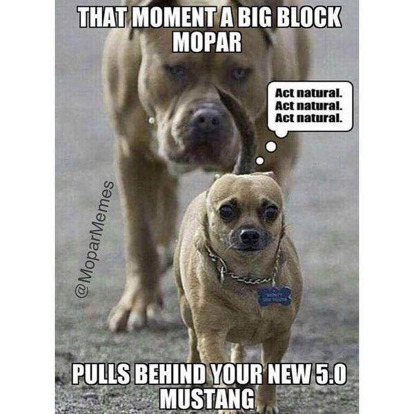 Funny Dodge the Dog Joke