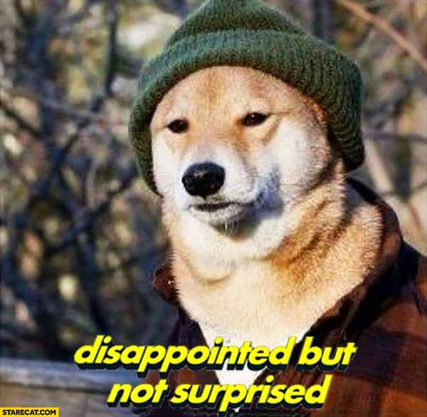 Funny Doge Jokes Photos