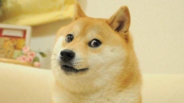 Funny Doge Original Image Joke