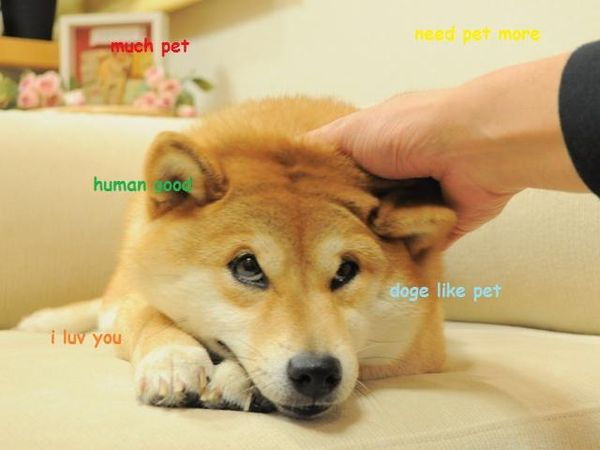 Funny Doge Pictures Jokes