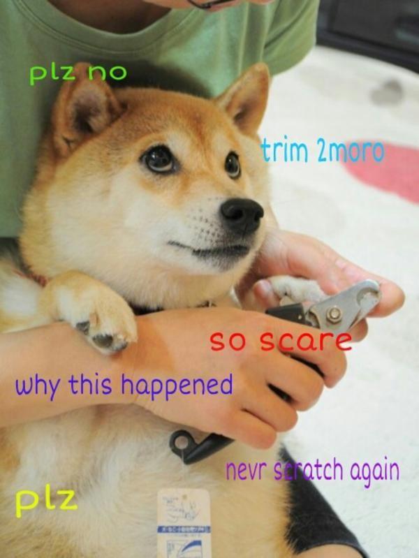 Funny Doge Sayings Image