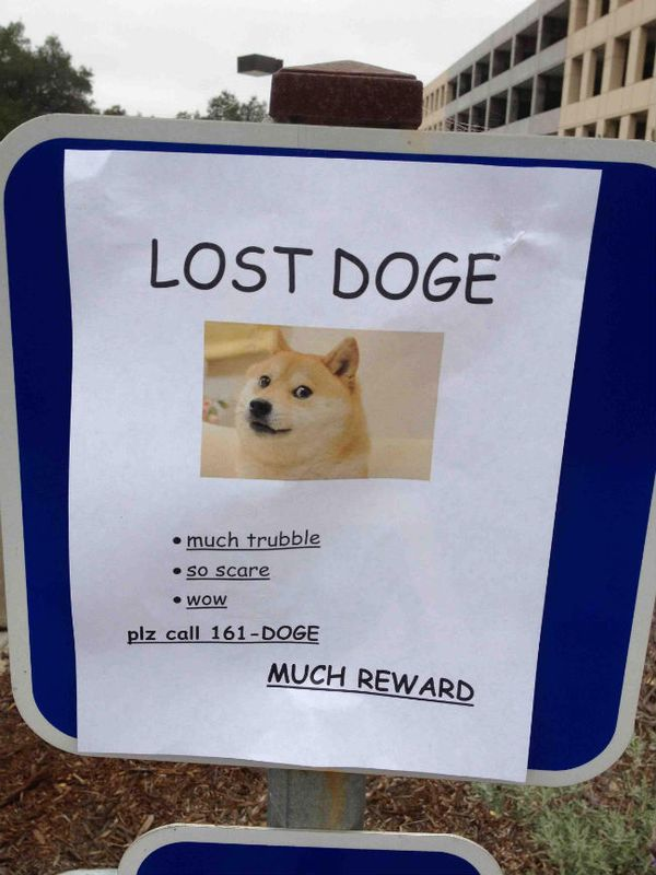 Funny Lost Doge Meme Picture