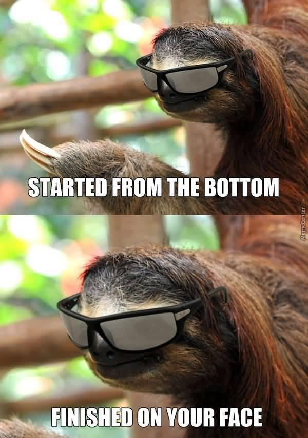 Funny dirty sloth meme photo
