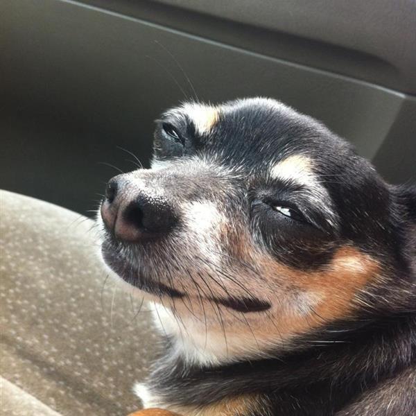Funny dog face meme image