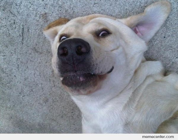 Funny dog face meme picture